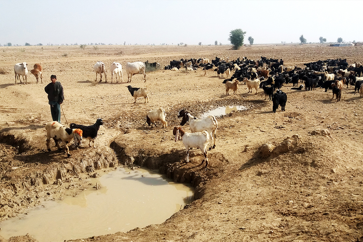 Spate Irrigation Project - Allah Bakhsh Baloch