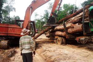 Illegal Logging - Leng Ouch